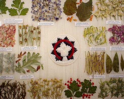 Millions of medicinal plants have not yet been documented.