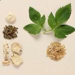 Chinese herb dang gui