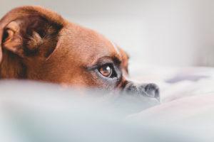 pet-stress