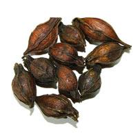 Pacific Herbs Ingredient Gardeniae Fructus zhi zi