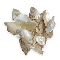 Pacific Herbs Ingredient Concha Margarita Zhen Zhu Mu